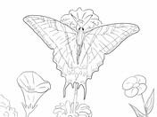 Ulysses Butterfly coloring #6, Download drawings