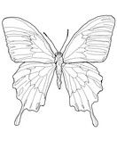 Ulysses Butterfly coloring #19, Download drawings