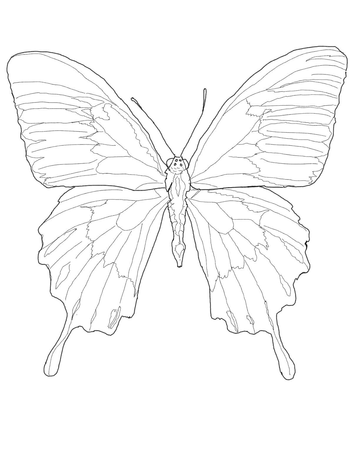 Ulysses Butterfly coloring #13, Download drawings