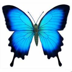 Ulysses Butterfly svg #14, Download drawings