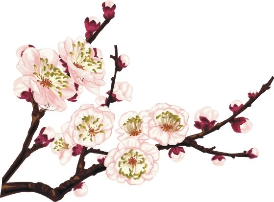 Ume Blossom clipart #10, Download drawings