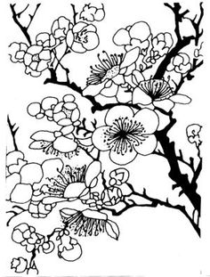 Ume Blossom coloring #20, Download drawings