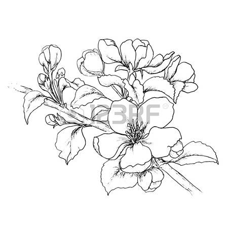 Ume Blossom coloring #11, Download drawings