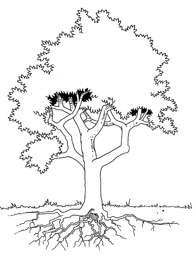 Ume Tree coloring #20, Download drawings