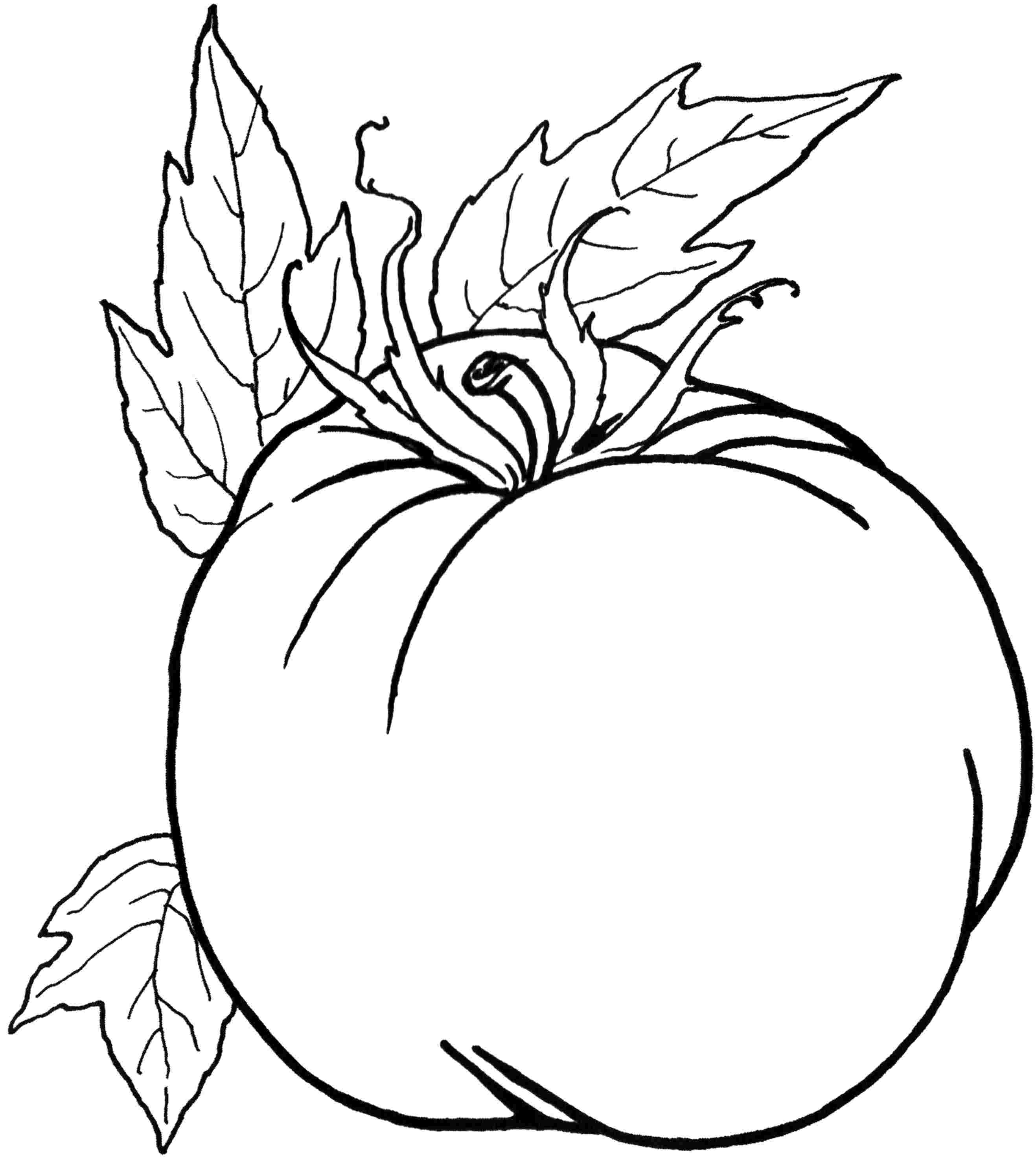 Vegetable coloring #20, Download drawings