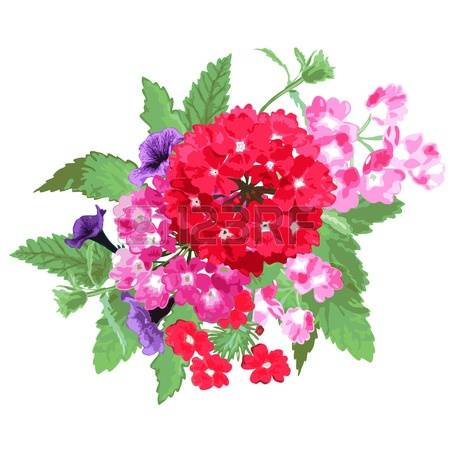 Verbena clipart #20, Download drawings