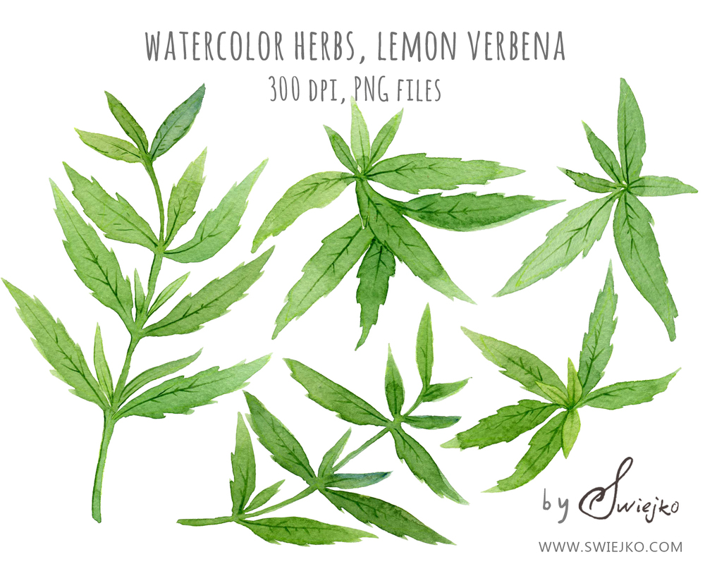 Verbena clipart #16, Download drawings