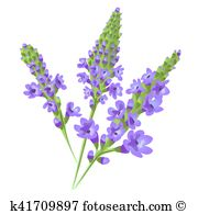 Verbena clipart #11, Download drawings