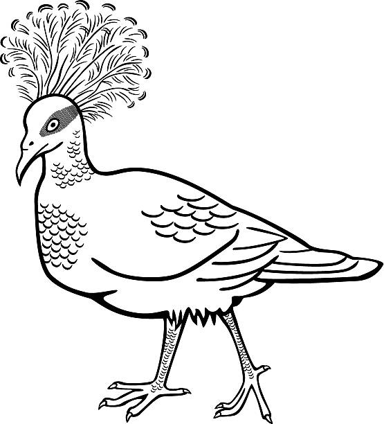 Victoria Crowned Pigeon clipart #6, Download drawings