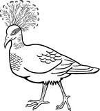 Victoria Crowned Pigeon clipart #16, Download drawings