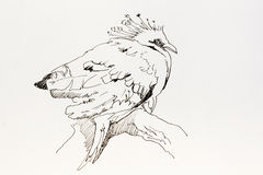 Victoria Crowned Pigeon coloring #1, Download drawings