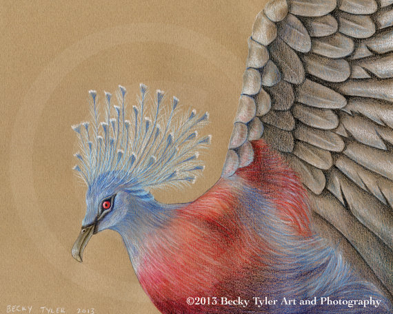 Victoria Crowned Pigeon coloring #15, Download drawings