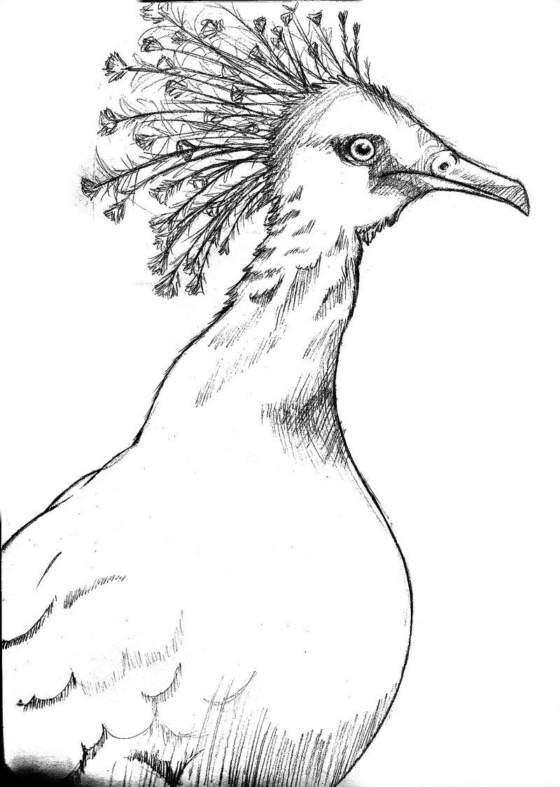 Victoria Crowned Pigeon coloring #11, Download drawings