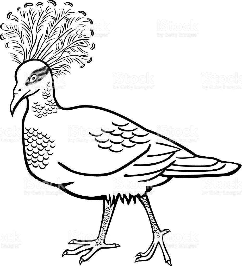 Victoria Crowned Pigeon coloring #20, Download drawings