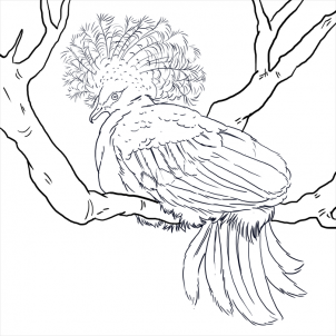 Victoria Crowned Pigeon coloring #18, Download drawings