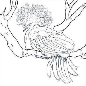 Victoria Crowned Pigeon coloring #18, Download drawings