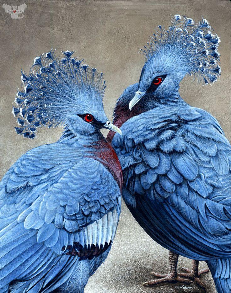 Victoria Crowned Pigeon svg #3, Download drawings