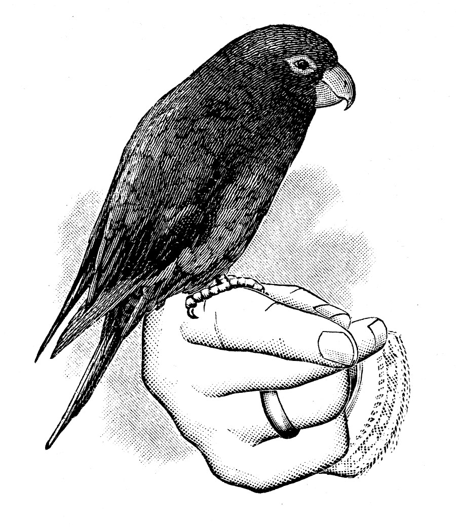 Victorian clipart #1, Download drawings