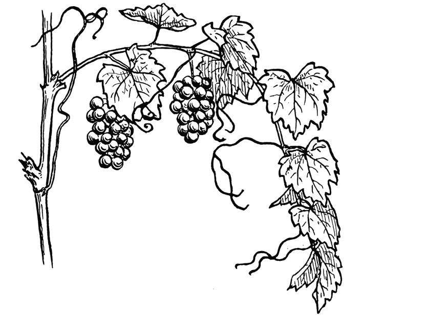 Vines coloring #12, Download drawings