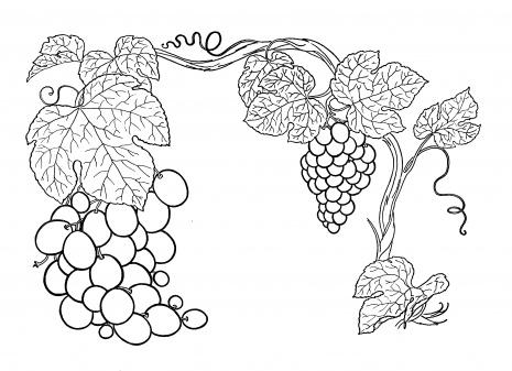 Vines coloring #5, Download drawings
