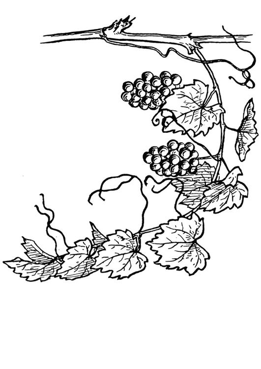 Vine coloring #3, Download drawings