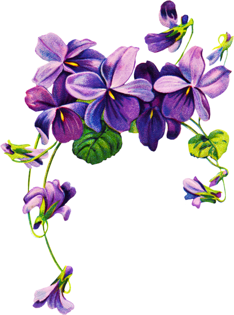 Violet clipart #2, Download drawings
