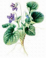 Violet clipart #8, Download drawings