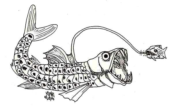 Viperfish coloring, Download Viperfish coloring for free 2019