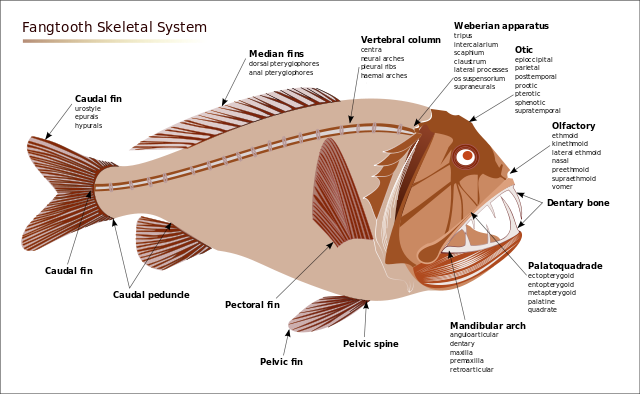 Viperfish svg #20, Download drawings