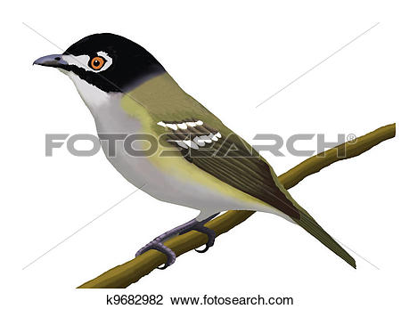 Vireo clipart #20, Download drawings