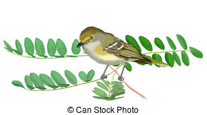 Vireo clipart #15, Download drawings