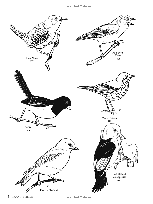 Vireo clipart #1, Download drawings