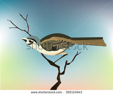 Vireo clipart #10, Download drawings
