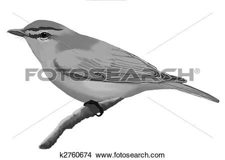 Vireo clipart #17, Download drawings