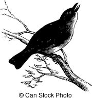 Vireo clipart #18, Download drawings
