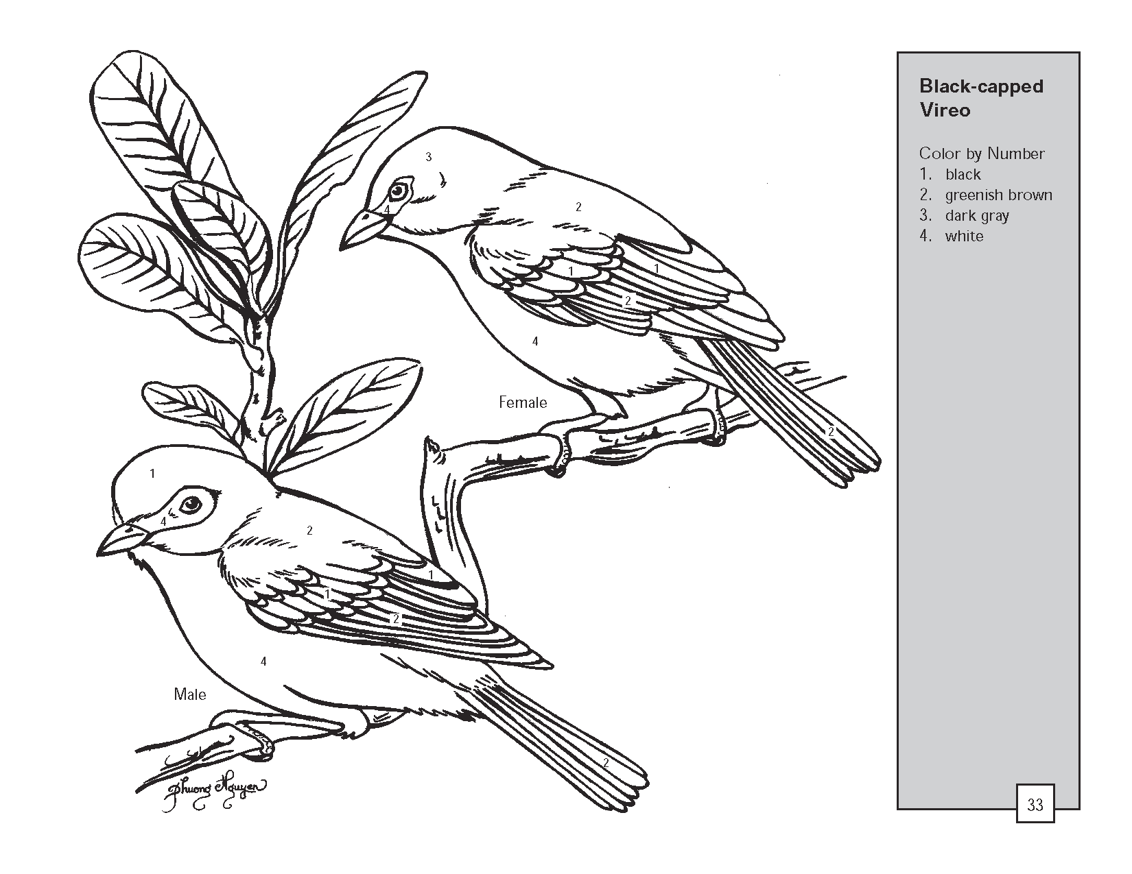 Vireo coloring #4, Download drawings