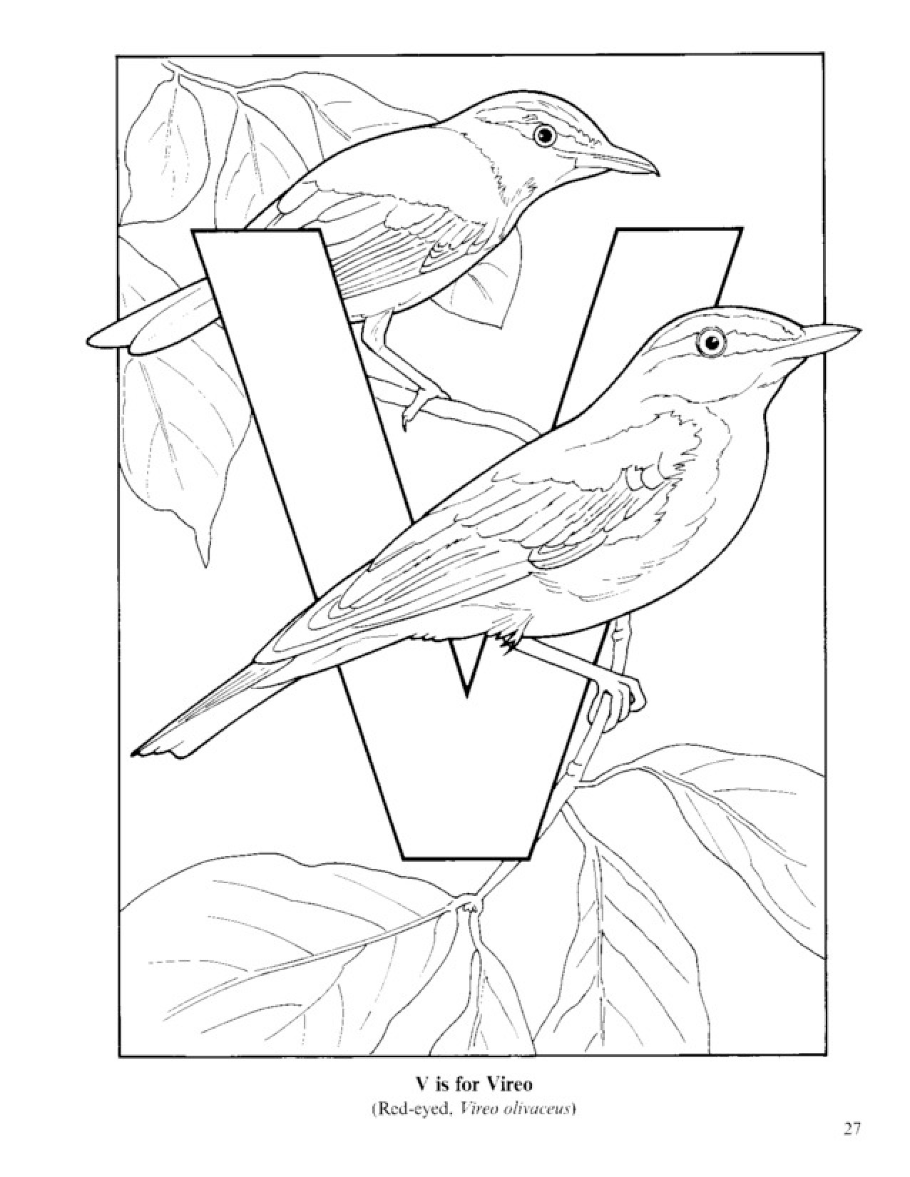 Vireo coloring #2, Download drawings