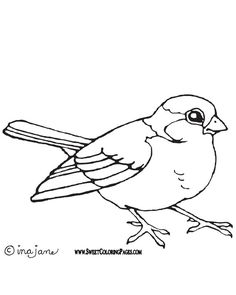 Vireo coloring #5, Download drawings