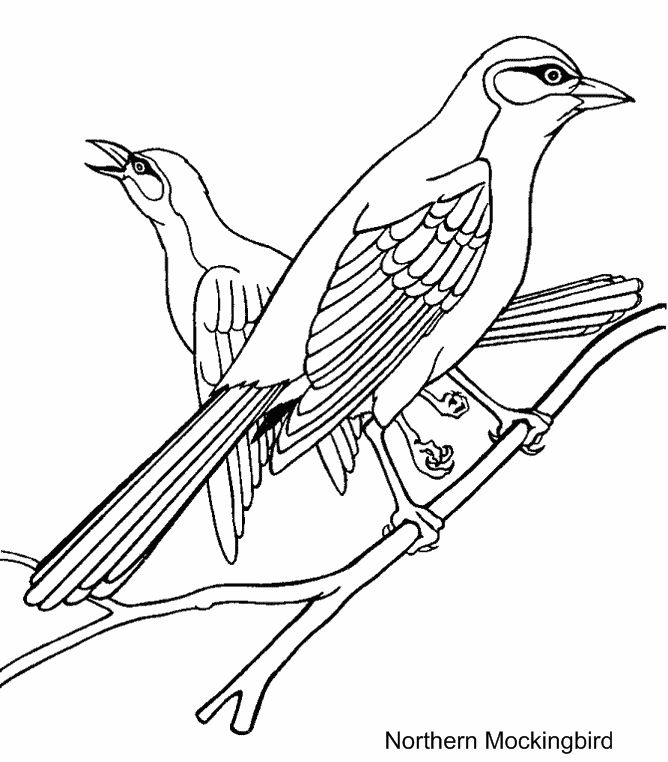Vireo coloring #12, Download drawings