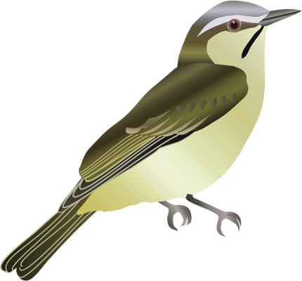 Vireo svg #20, Download drawings