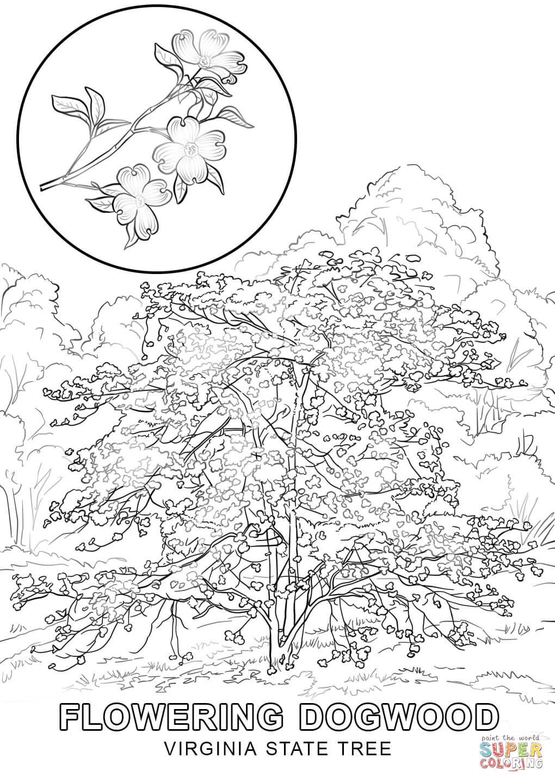 Virginia coloring #3, Download drawings