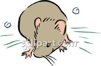 Vole clipart #17, Download drawings