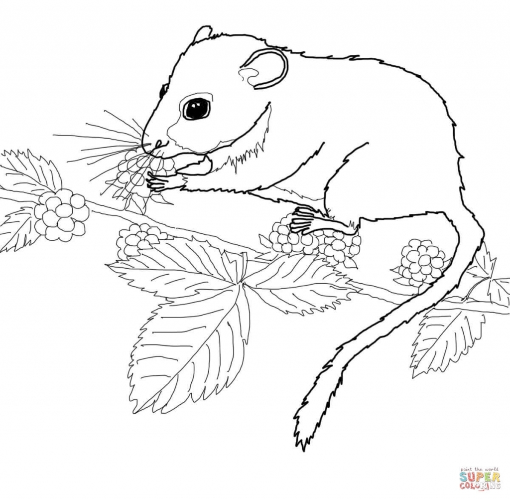 Vole coloring #11, Download drawings