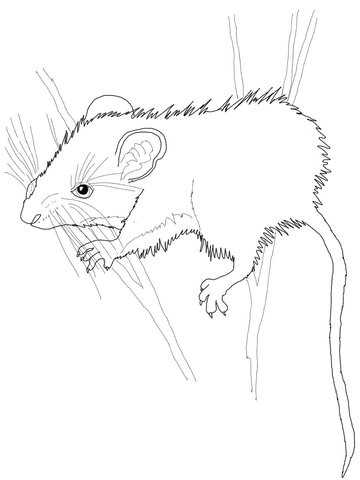 Vole coloring #20, Download drawings