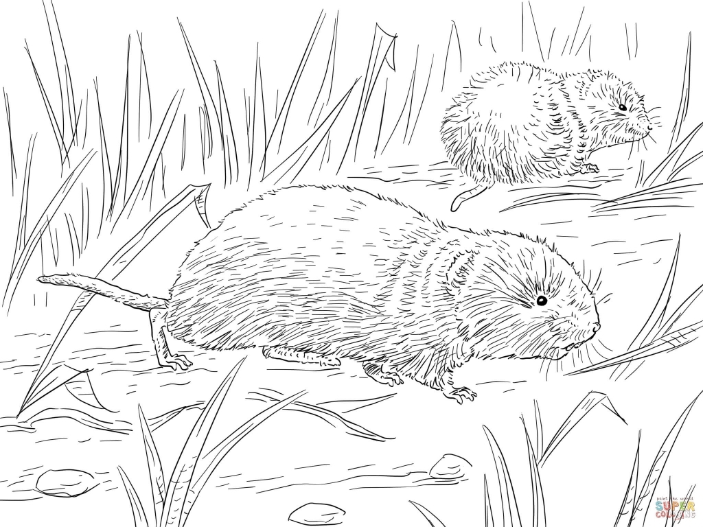 Vole coloring #13, Download drawings