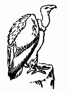 Vulture clipart #6, Download drawings