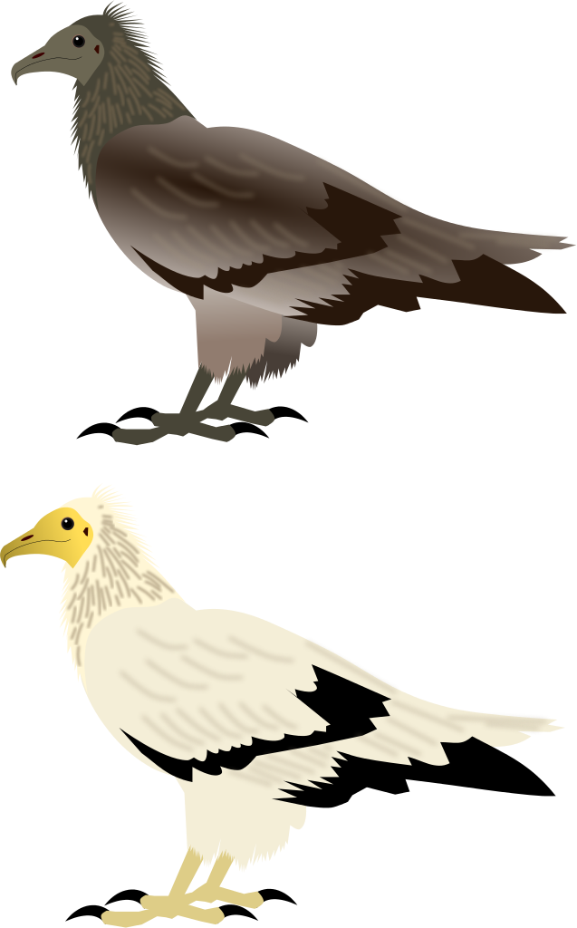 Vulture svg #10, Download drawings