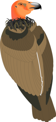 Vulture svg #8, Download drawings