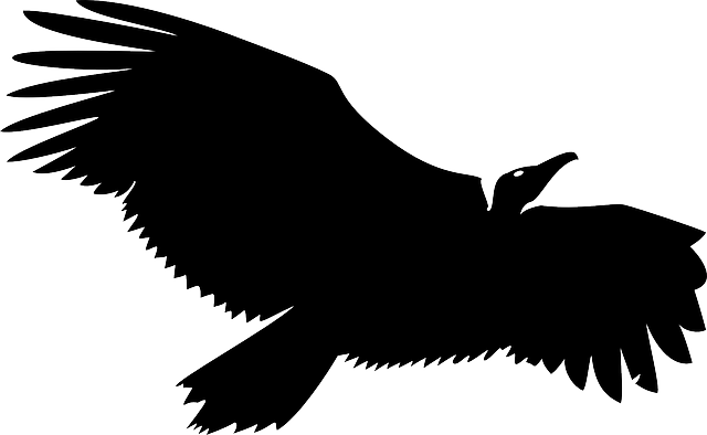 Vulture svg #12, Download drawings