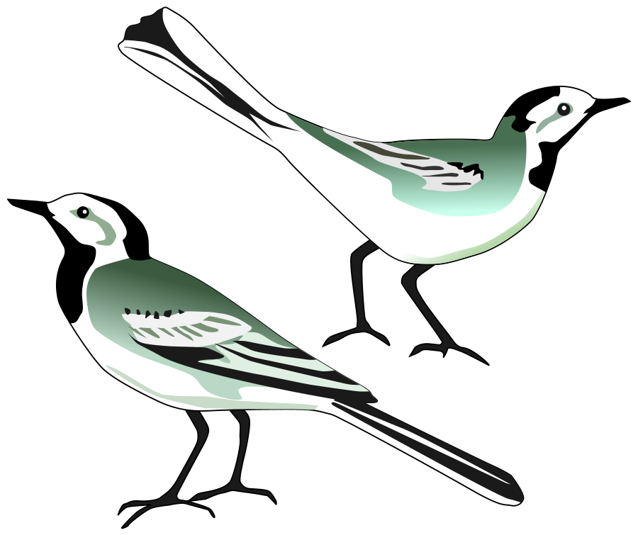 Wagtail clipart #10, Download drawings